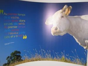 Exposition La vache ! - Jardin des Sciences Dijon 150313 (1)