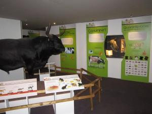 Exposition La vache ! - Jardin des Sciences Dijon 150313 (2)