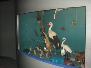 Inauguration Muséum Dijon 280613 (36)