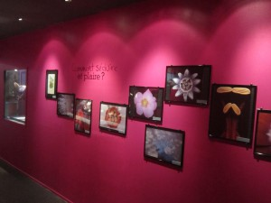 Exposition Amour pas si bête Muséum Dijon 050714 (8)