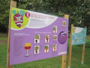54Exposition Diversité des cépages en Bourgogne Jardin Arquebuse 210914 (1)