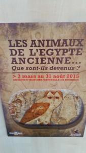 Exposition Les animaux d'Egypte ancienne Muséum 070315 (1)