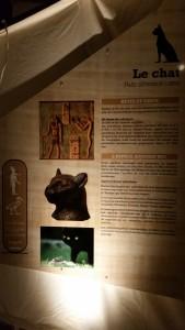 Exposition Les animaux d'Egypte ancienne Muséum 070315 (11)