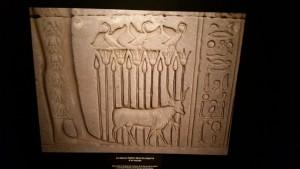 Exposition Les animaux d'Egypte ancienne Muséum 070315 (5)