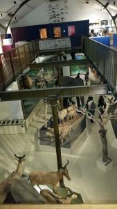 Muséum d'Histoire naturelle Bourges 101015 (6)