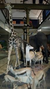 Muséum d'Histoire naturelle Bourges 101015 (8)