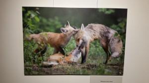 Exposition Photographes de nature Muséum d'histoire naturelle Bourges 281215 (16)