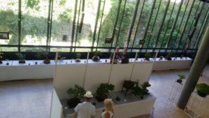 Exposition Bonzaï Mairie 010619 (2)