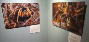 Vernissage exposition Photographes de nature Muséum 171219 Jusqu'au 010320 (12)